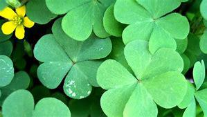 Four easy steps to go truly green on St Patrick's Day!